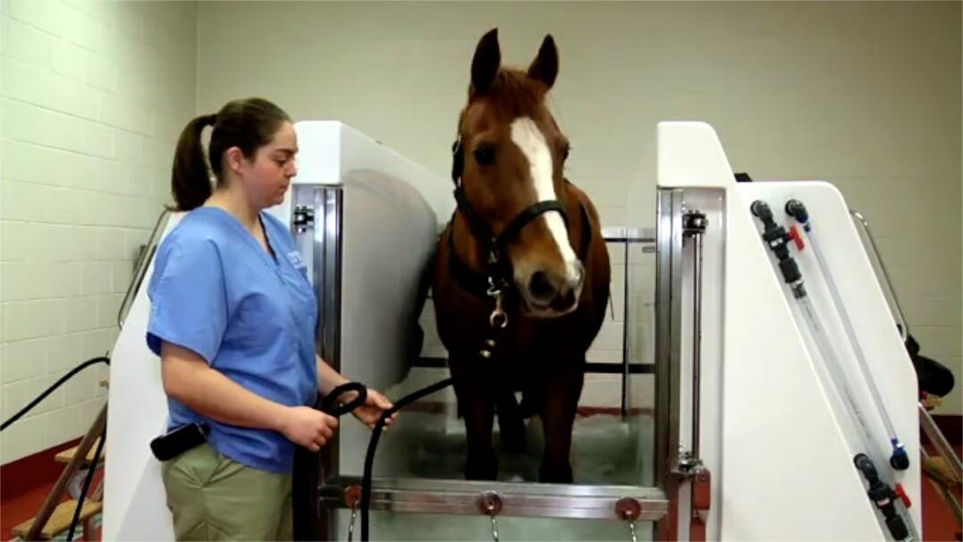 Spa dla koni. Odpręża, leczy i poprawia krążenie