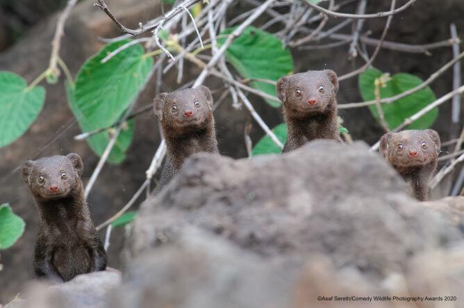 Asaf Sereth/Comedy Wildlife Photo Awards 2020