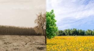 Skutki suszy najbardziej odczuwalne są w środkowej części kraju
