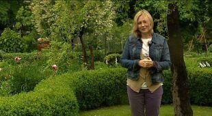 Ogród w stylu angielskim (odc. 419)