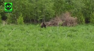 Spotkanie z niedźwiedzią rodziną